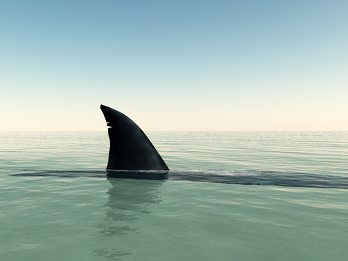 The fin of a shark just above the water